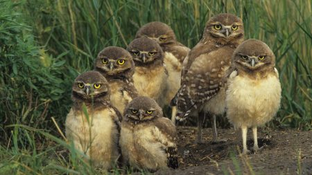 birds, owls, set