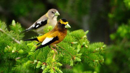 birds, pair, branch