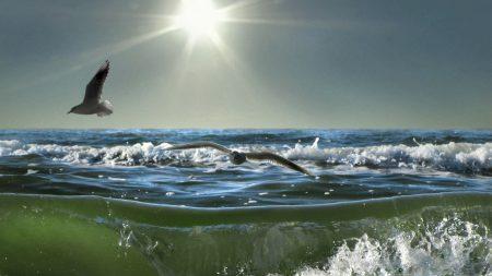 birds, sea, sun