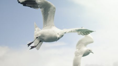 birds, sky, seagulls