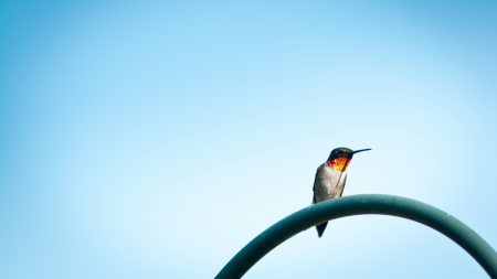 birds, sky, sit