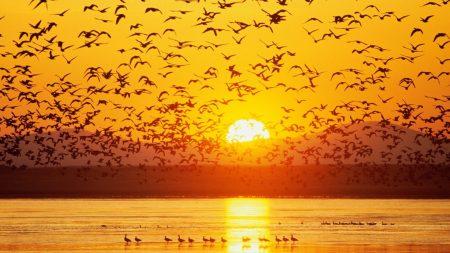 birds, sunset, sky