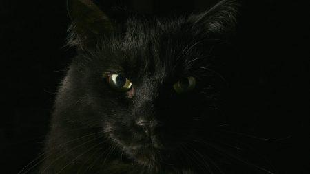 black, cat, face