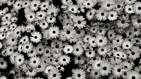 black white, flowers, grey