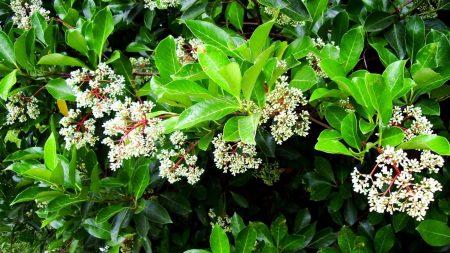 blooms, shrubs, herbs