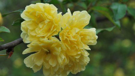 blossom, spring, awakening