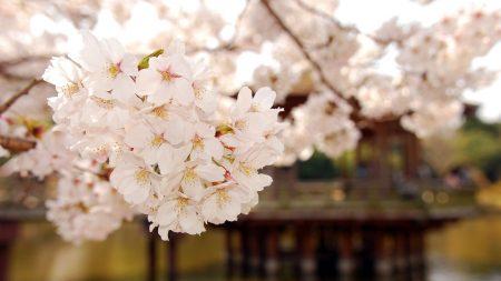blossom, spring, garden