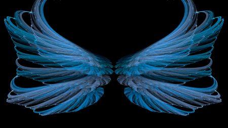 blue, black, wings