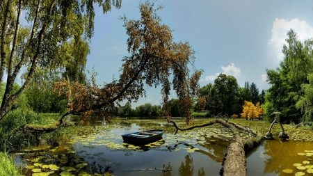 boat, trees, water-lilies