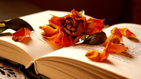 book, flower, rose