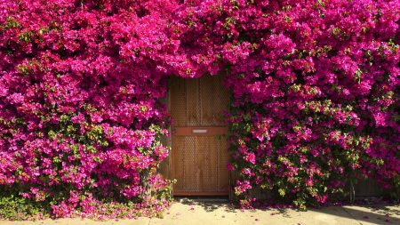 bougainville, fencing, doors