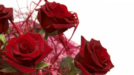 bouquet, rose, red