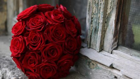 bouquet, roses, red