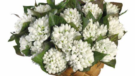 bouquets, tulips, basket