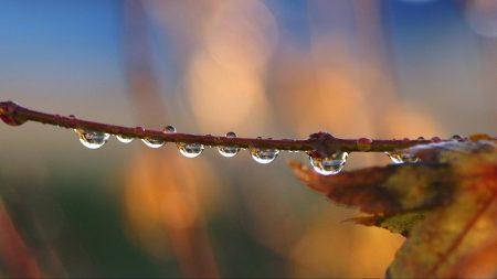 branch, drops, autumn