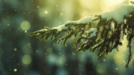 branch, fir-tree, snow