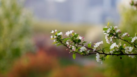 branch, plant, bloom