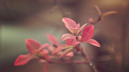 branch, plant, bright