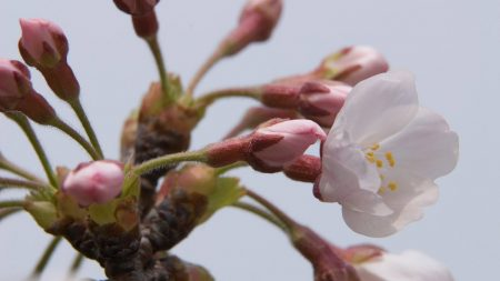branch, plant, flower