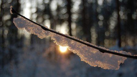 branch, snow, light