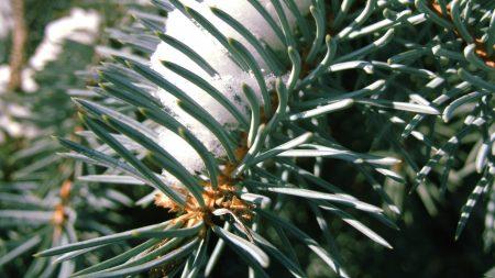 branch, thorns, needles