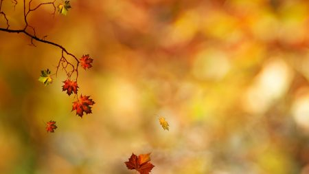 branches, leaves, autumn
