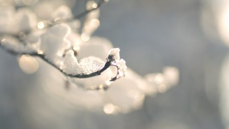 branches, snow, winter