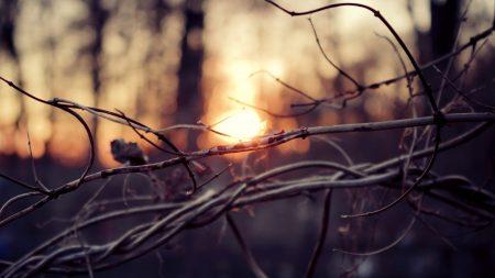 branches, sticks, light