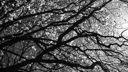 branches, tree, black-and-white