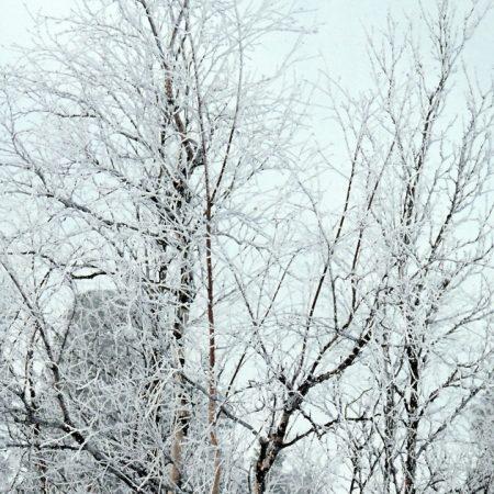 branches, trees, crones