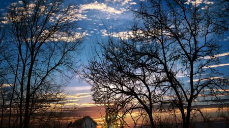 branches, trees, sunset