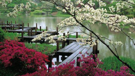 bridge, branches, flowering