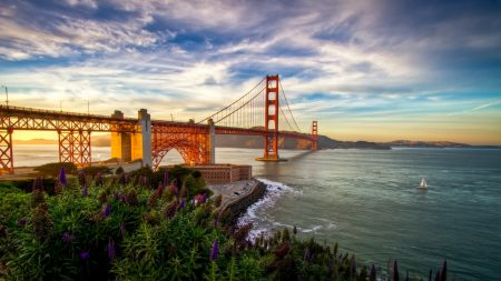 bridge, coast, flowers