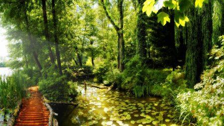 bridge, jungle, thickets