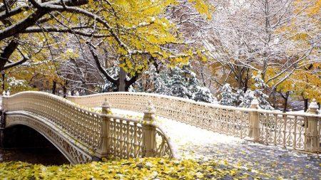 bridge, park, autumn
