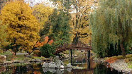 bridge, pond, stones