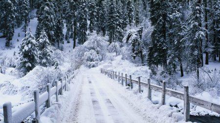 bridge, trees, winter