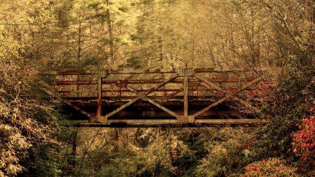 bridge, wood, trees