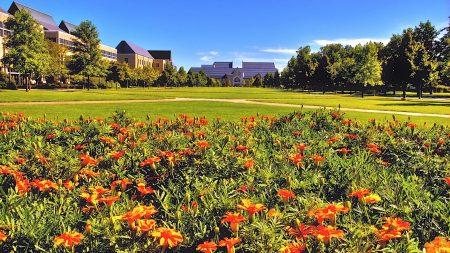 buildings, flowers, grass