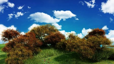 bushes, clouds, sky
