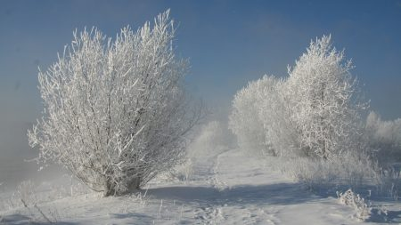 bushes, hoarfrost, snow