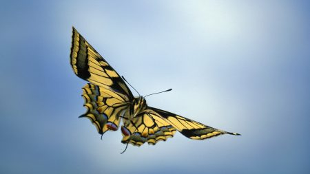 butterflies, flying, background