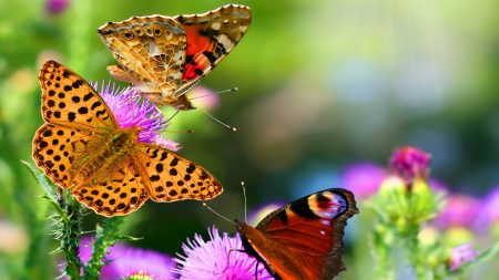 butterflies, flying, multicolored