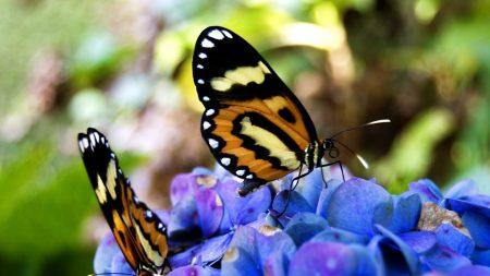 butterflies, leaves, petals