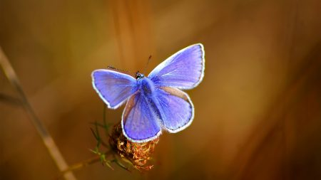 butterfly, bright, beautiful