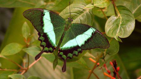butterfly, bright, branch