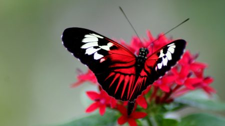 butterfly, color, bright