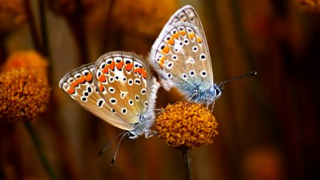 butterfly, couple, flowers
