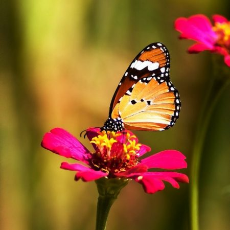 butterfly, flower, colorful