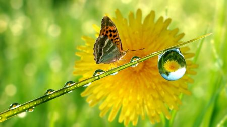 butterfly, flower, drop